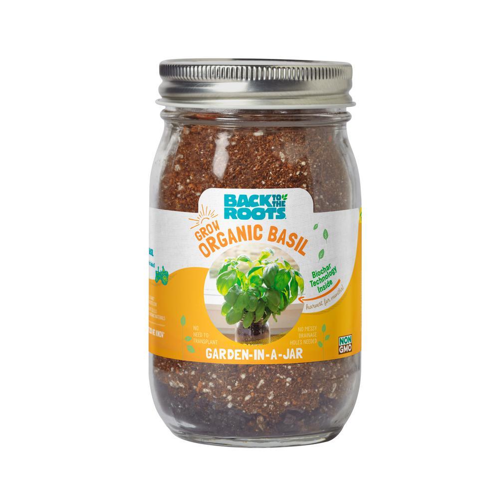 Garden in a Jar Organic Basil Plant