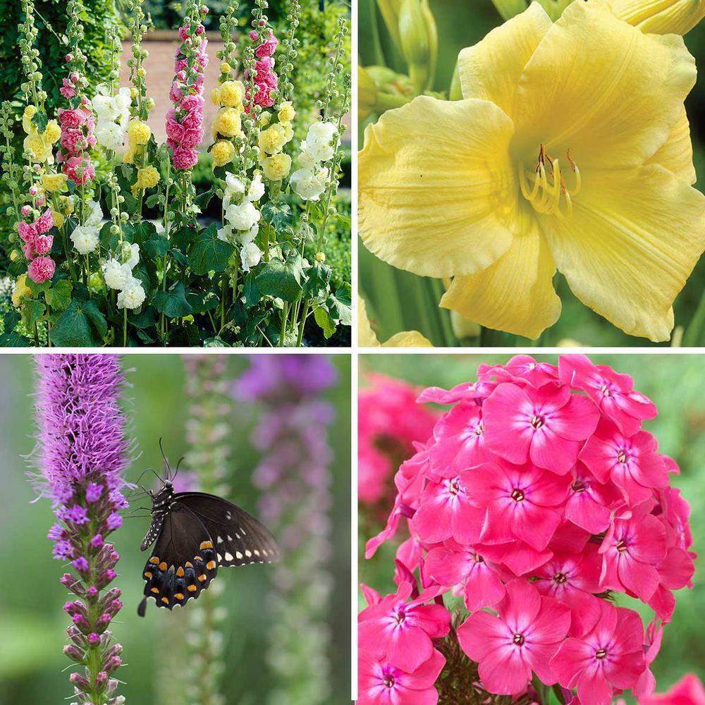 Assorted mix spring to summer flower bulbs garden plants butterfly garden bulbs 57 pack mightylinksfo