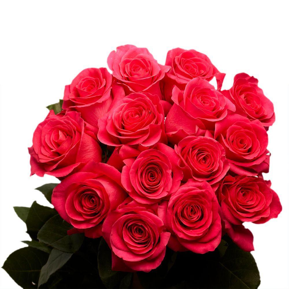 2 Dozen Hot Pink Roses