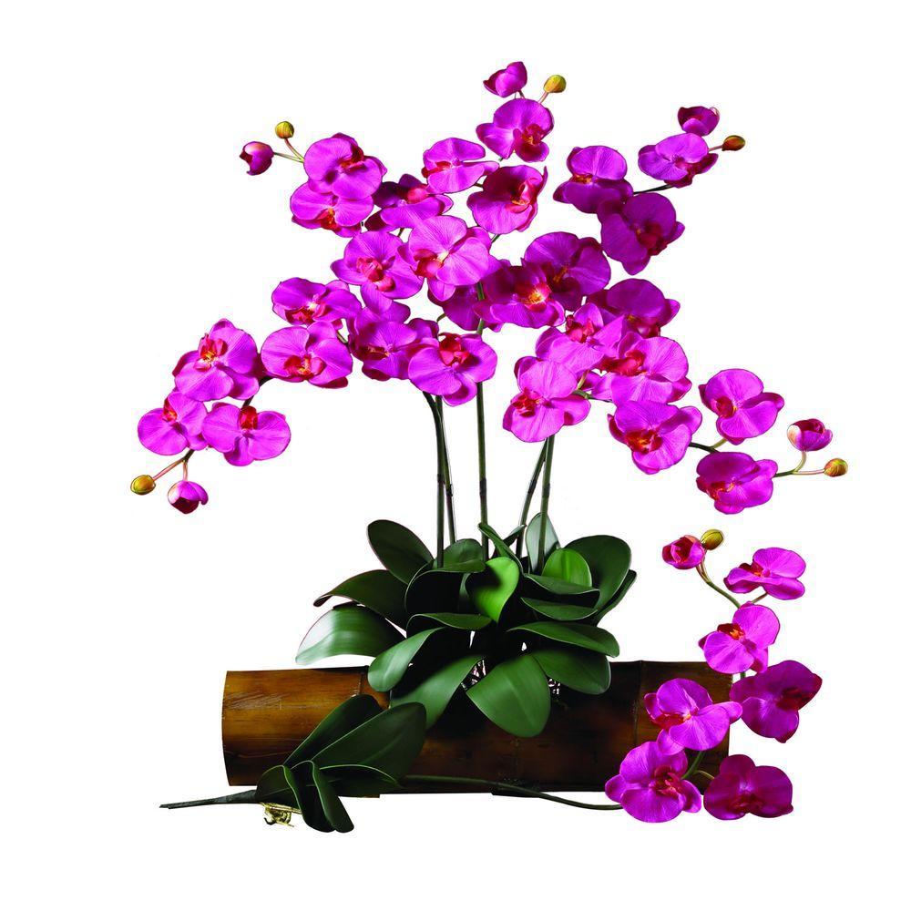 31.5 in. H Beauty Phalaenopsis Stem (Set of 12)