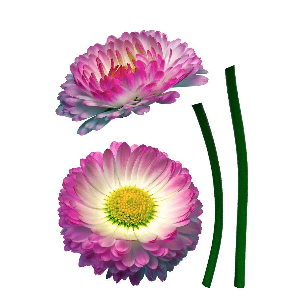 19 in. x 27 in. Daisy Wall Decal
