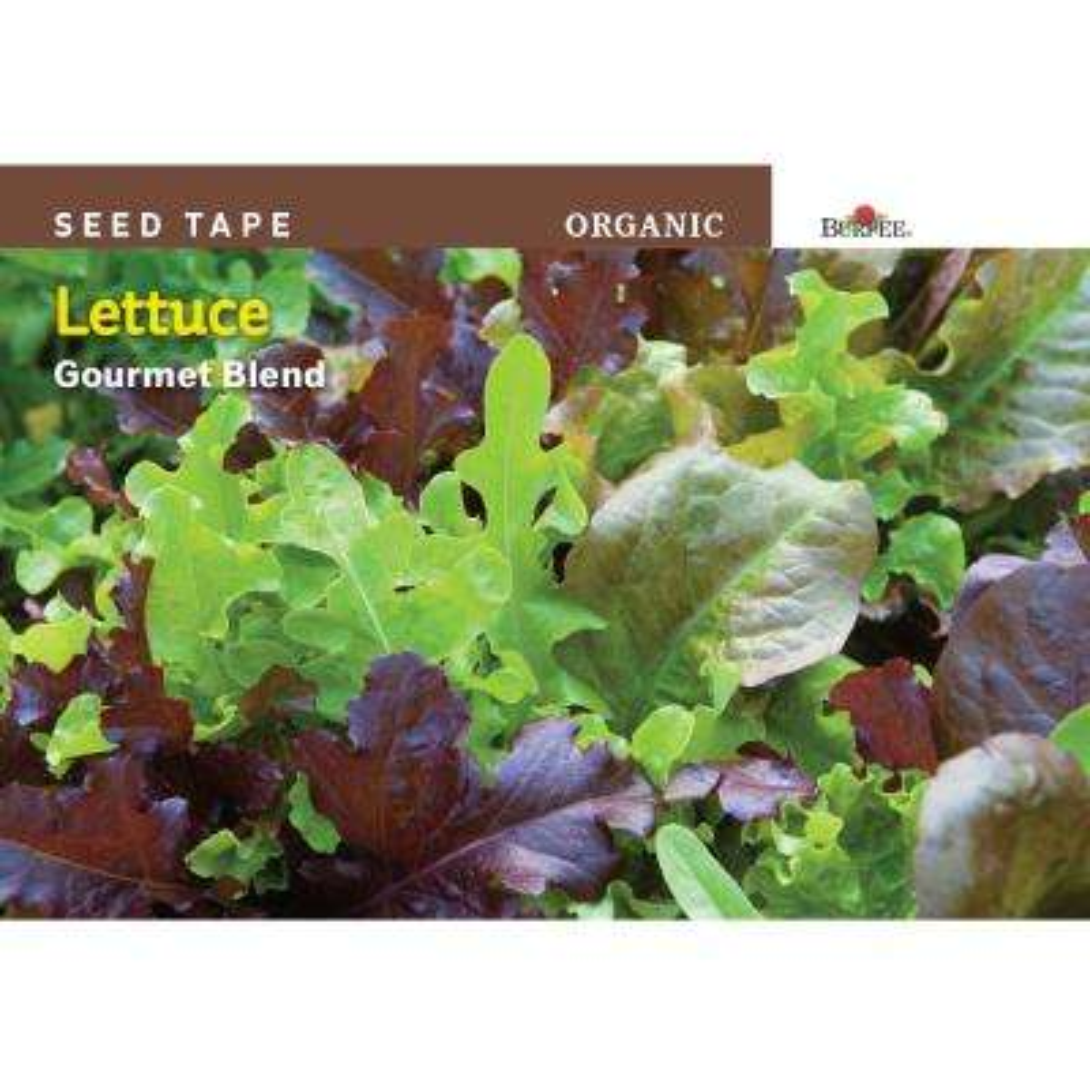 Seed Tape Organic Lettuce Gourmet Blend Seed
