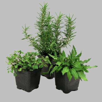 3.5 in. Fragrance Collection Multi-Colored Agastache-Lavender-Salvia Plants (3-Piece)