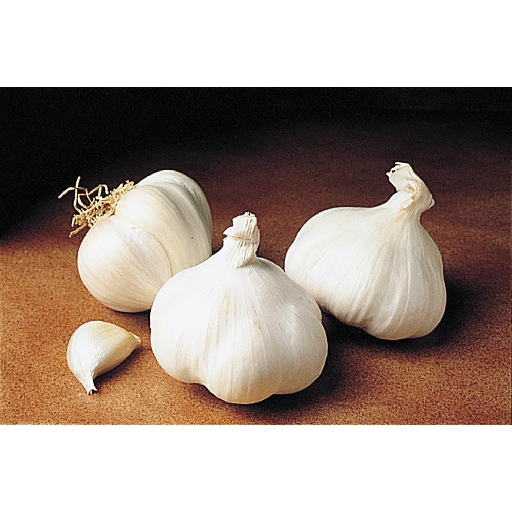 California White Softneck Garlic Bulbs