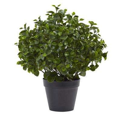 Indoor/Outdoor 23 in. Peperomia Plant UV Resistant