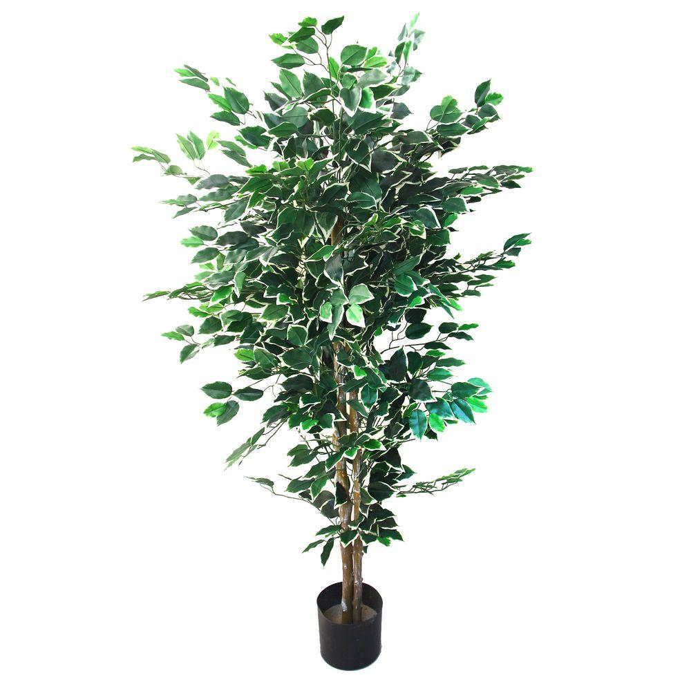 5 ft. Ficus Tree, Green