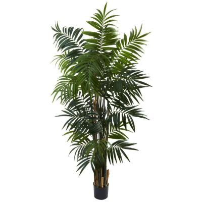 6 ft. Bulb Areca Palm Tree