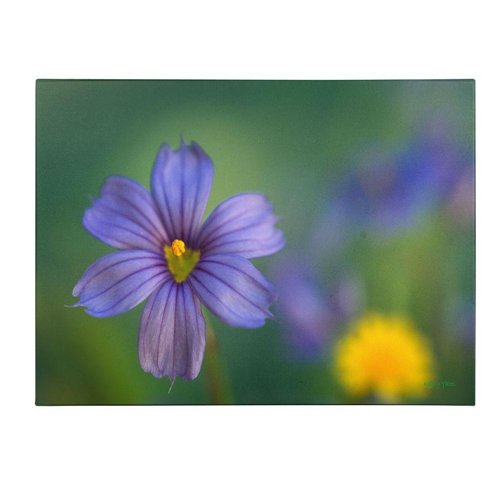 14 in. x 19 in. Blue Eyed Grass Canvas Art
