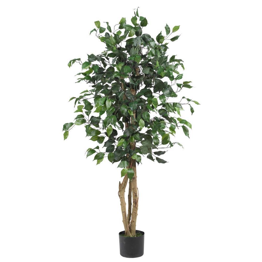 4 ft. Ficus Silk Tree
