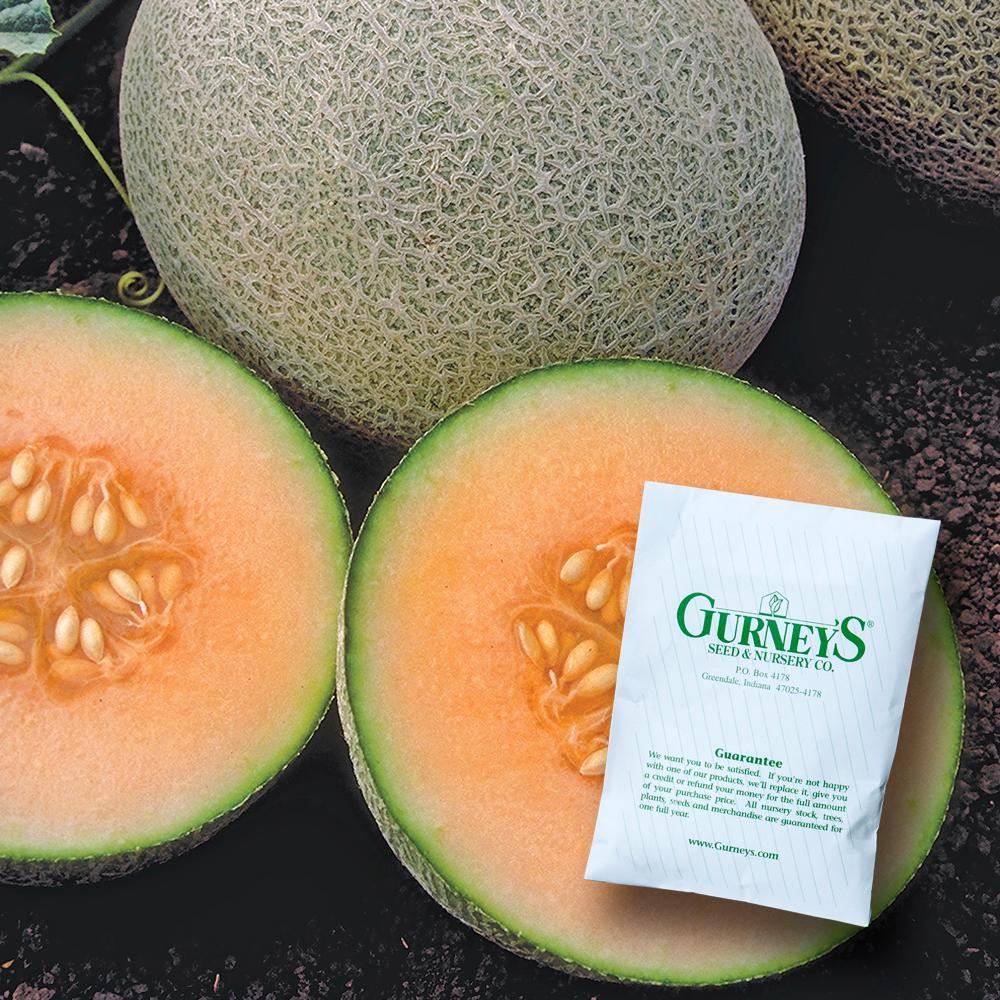 Cantaloupe Ambrosia Hybrid (20 Seed Packet)
