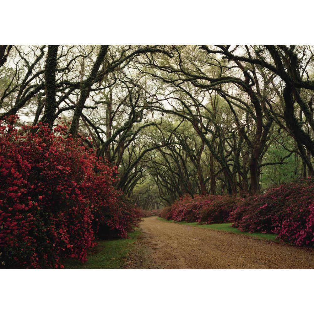 null 108 in. x 150 in. Majestic Trail Mural