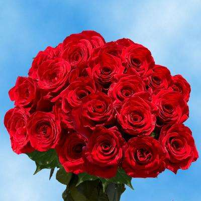 Fresh Red Color Roses (100 Stems)