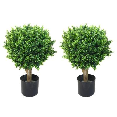2 ft. Hedyotis Topiary Trees (2-Pack)