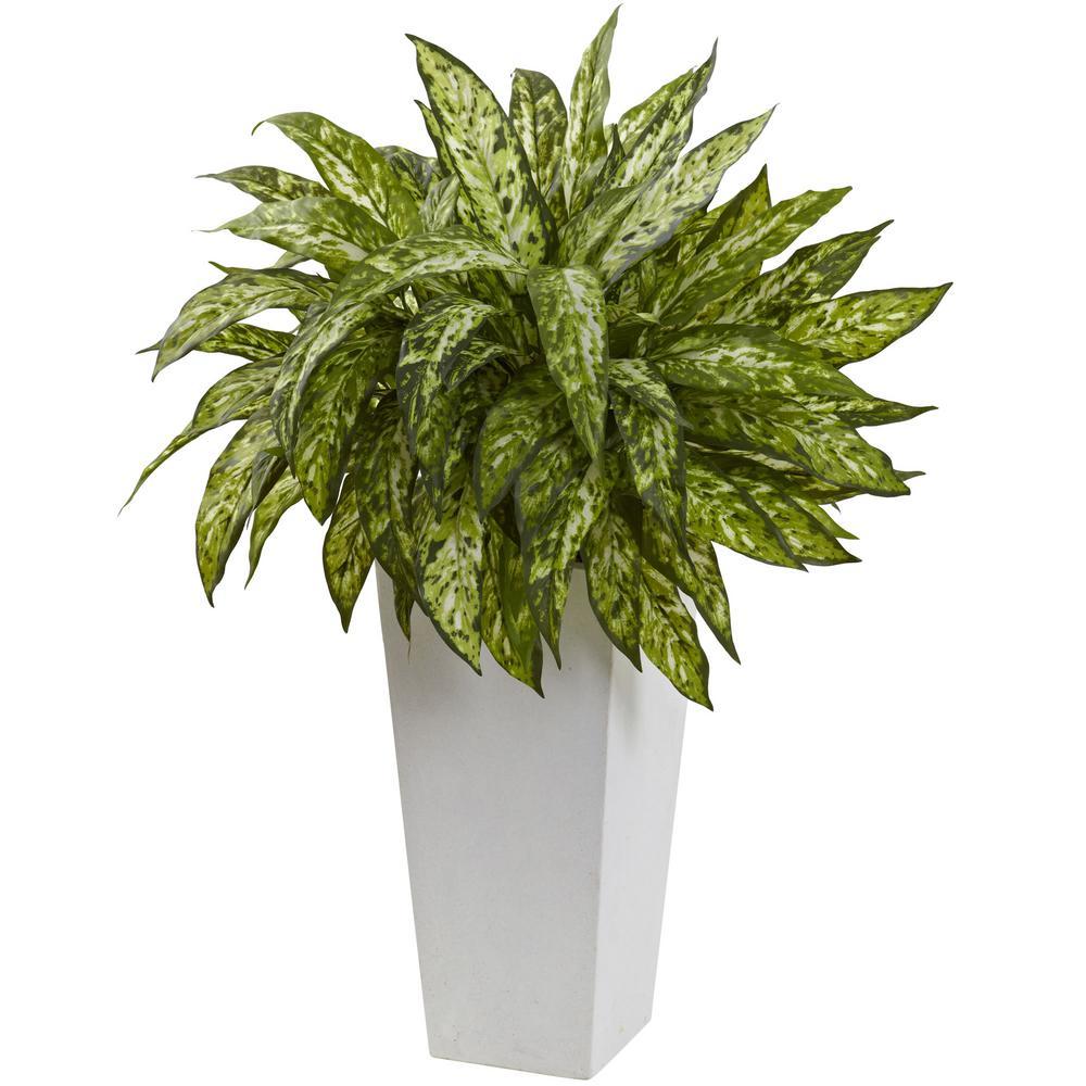 Aglaonema with White Decorative Planter