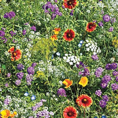 Beneficial Bug Wildflower Seed Mixture (0.25 lb. Seed Packet)