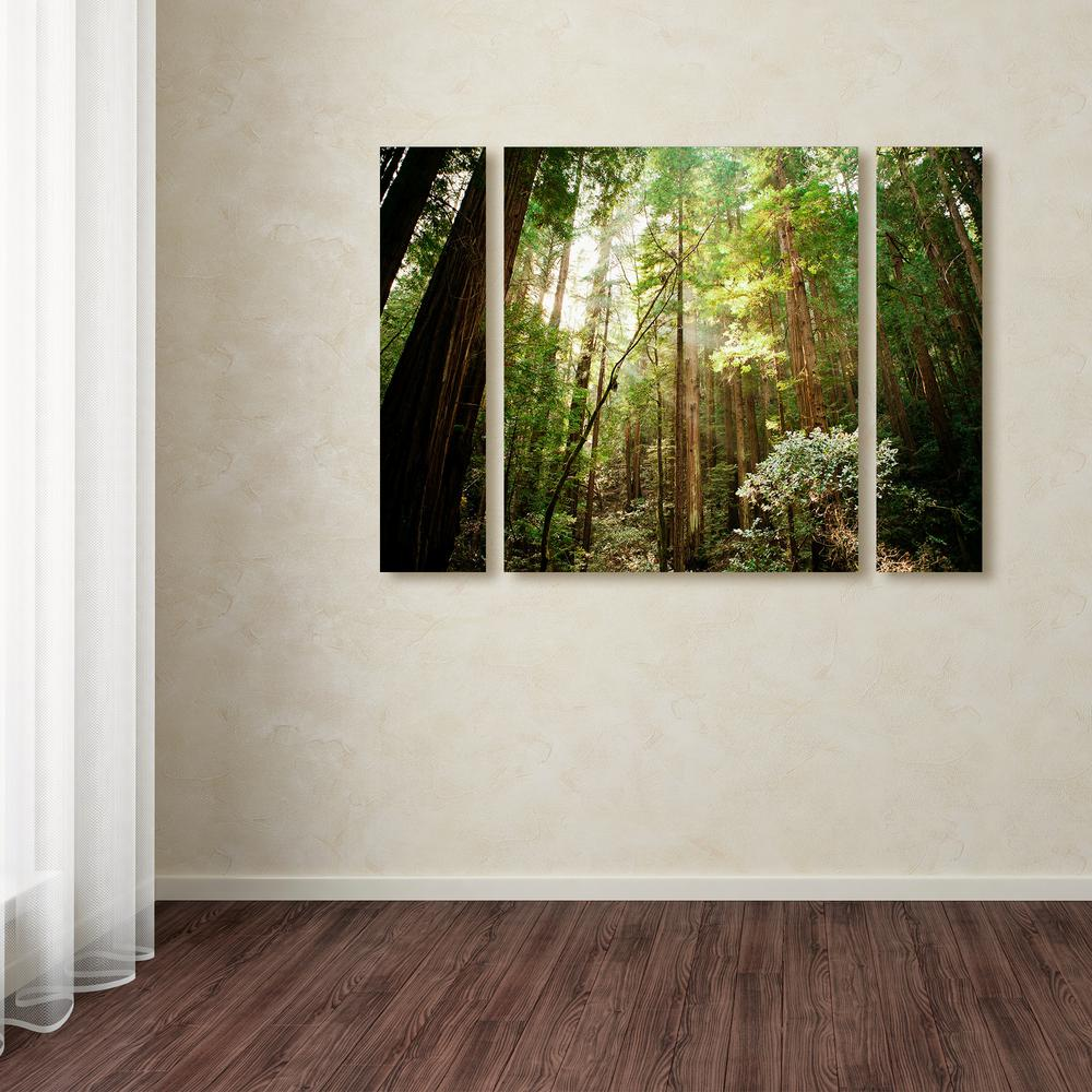 "24 in. x 32 in. ""Muir Woods"" by Ariane Moshayedi Printed"