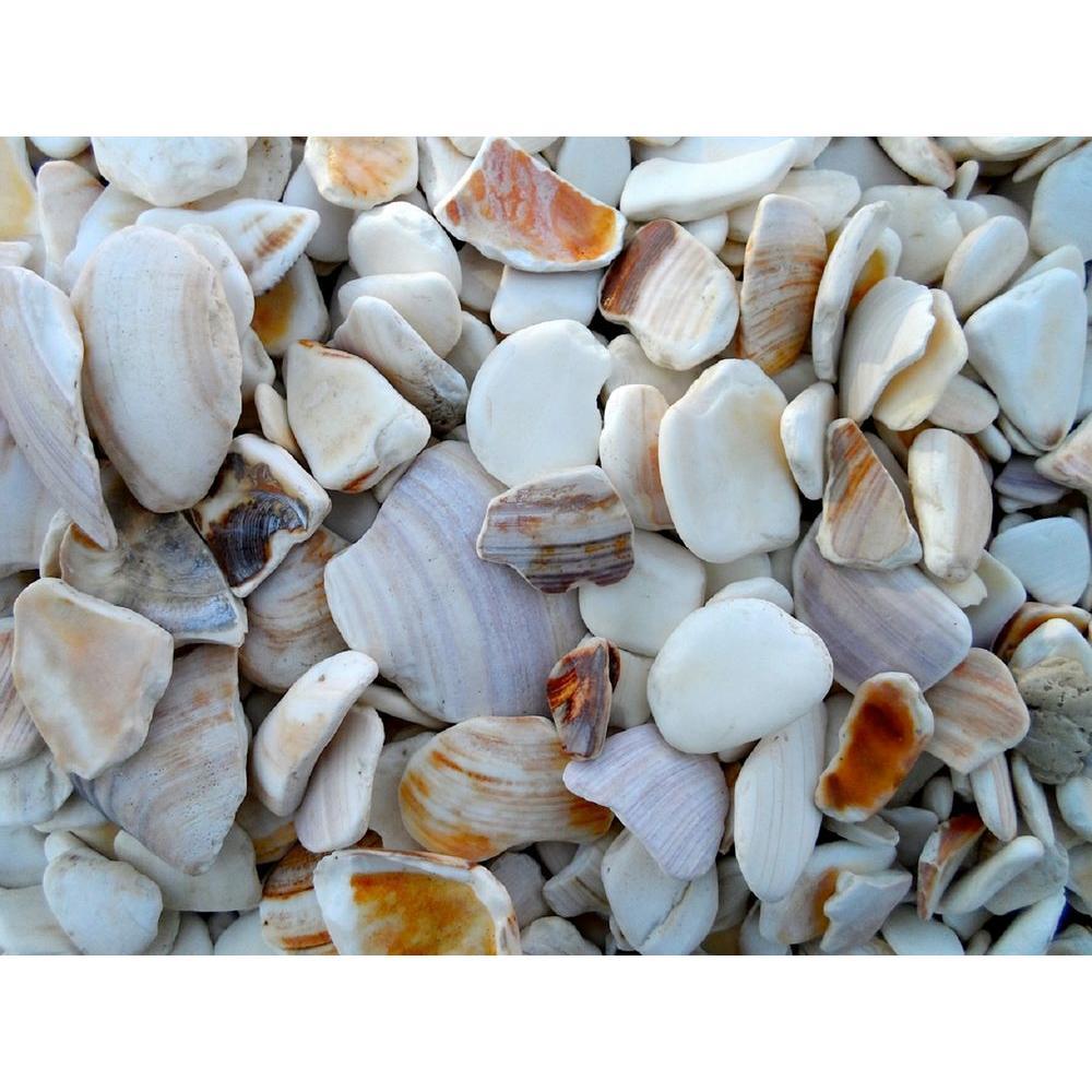 Shells - Medium - Butler Arts - Landscape Rocks - Hardscapes - The