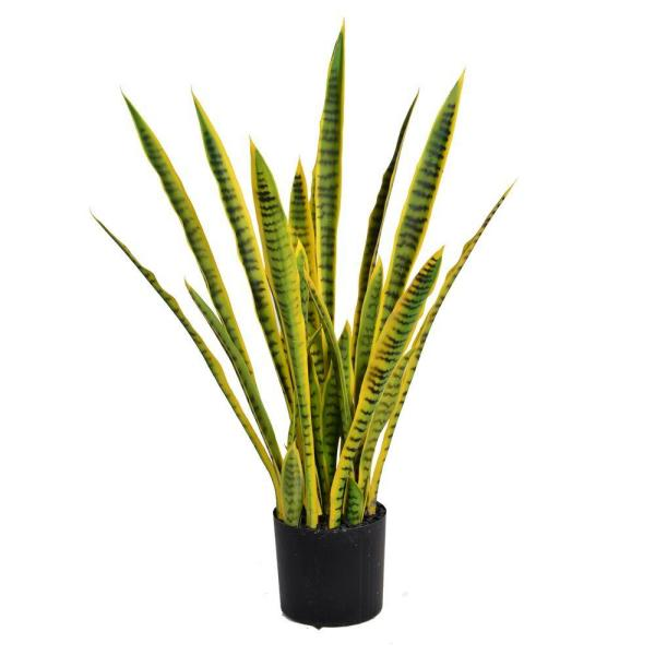 Laura Ashley 35 in. Tall Snake Plant (Sansevieria)