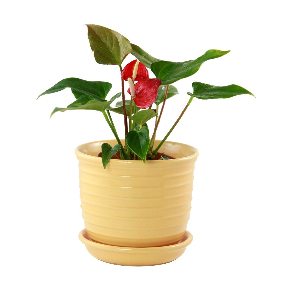 Pennington 624 in ceramic jefferson planter 100013940 the home depot this review is from825 in ceramic jefferson planter mightylinksfo