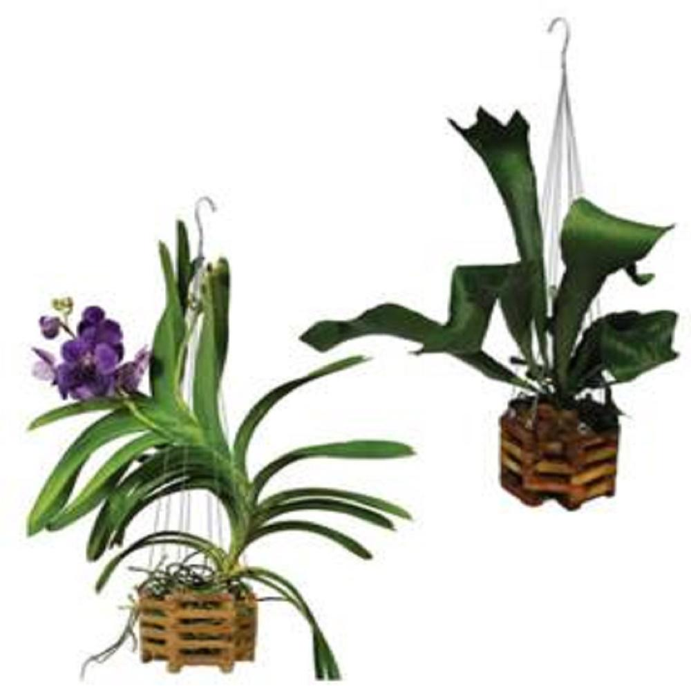 10 In Wood Orchid Planter