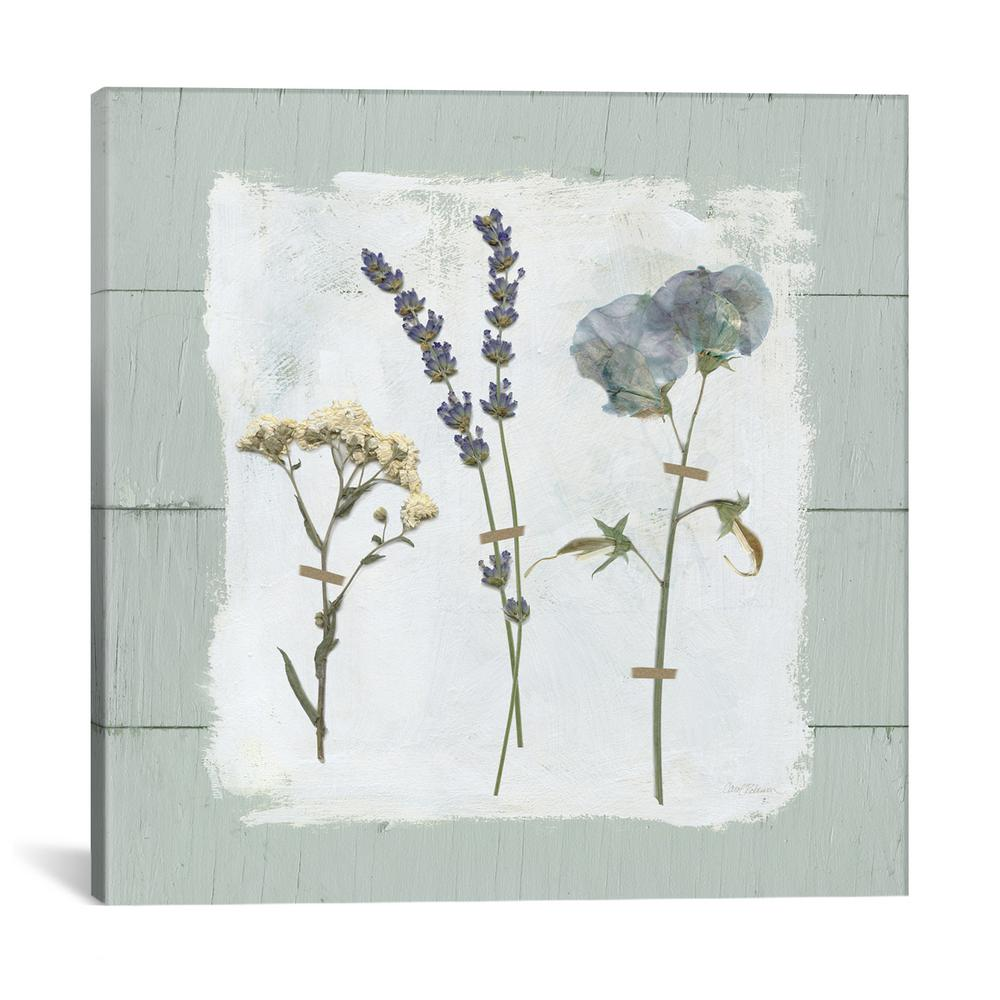 """Pressed Flowers On Shiplap II"" by Carol Robinson Canvas Wall Art"