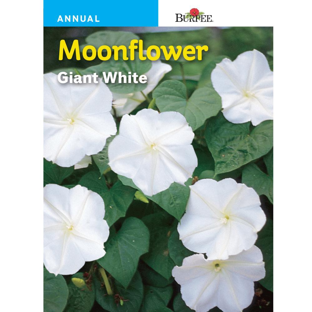 Burpee moonflower giant white seed 44081 the home depot burpee moonflower giant white seed mightylinksfo