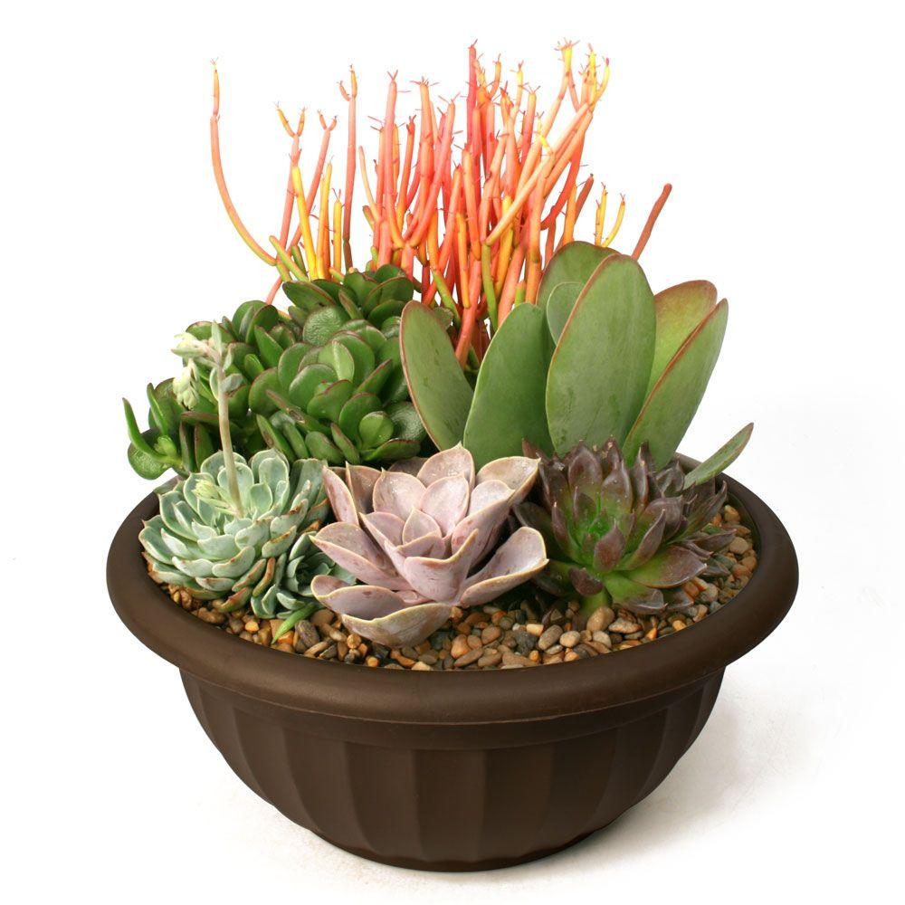Succulent garden plant your own kit 0881011 the home depot for Home garden plants