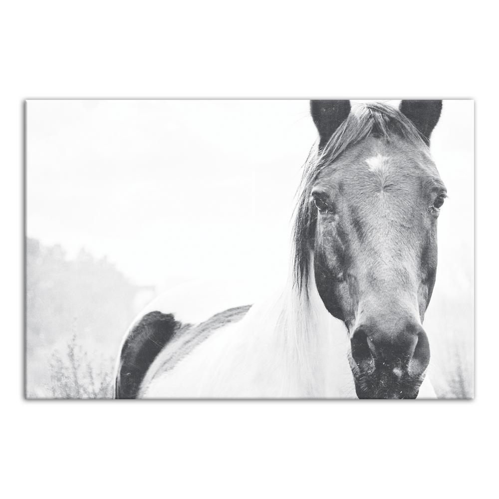 20 in. x 30 in. ''Black and White Lone Horse'' Printed