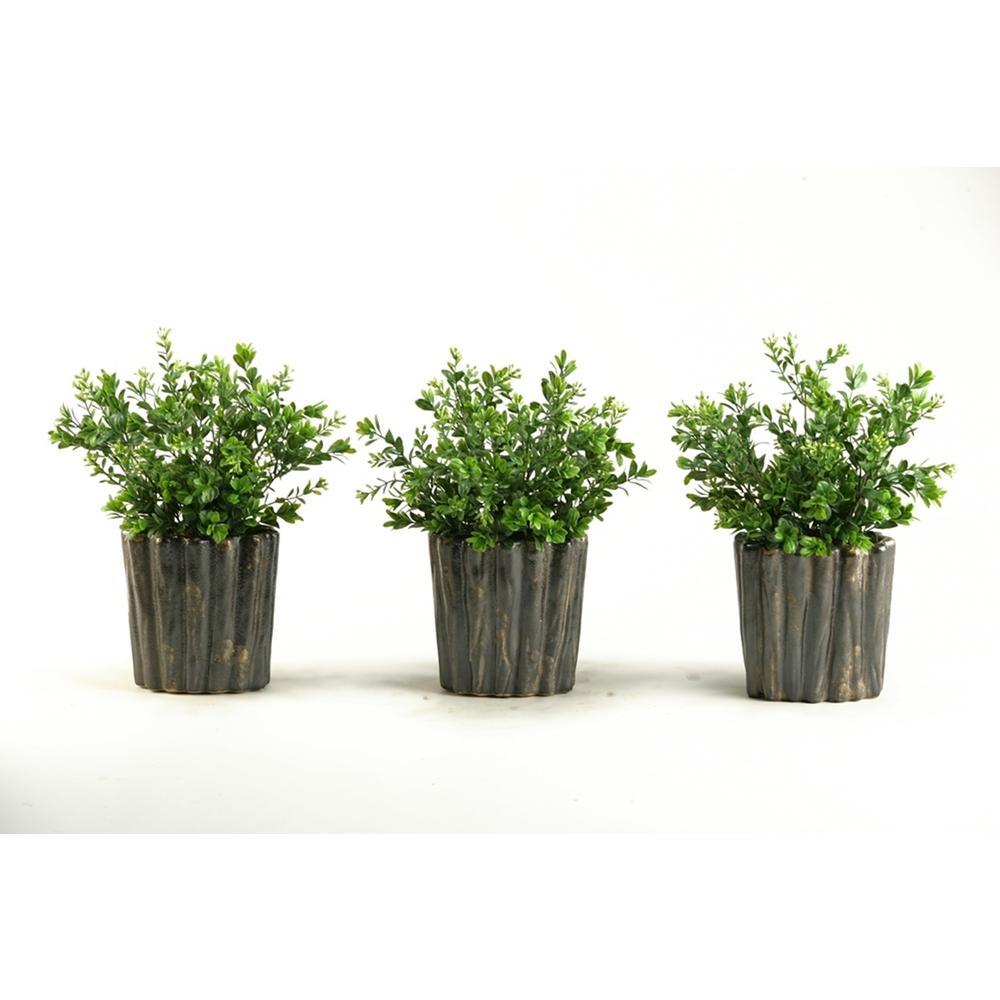 Indoor Dark Green Boxwood Spray in Oval Ceramic (Set of 3)