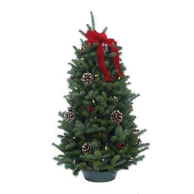 28 in. Balsam Classic Fresh Cut Fresh Pre-Lit Tabletop Tree Arrangement : Multiple Ship Weeks Available