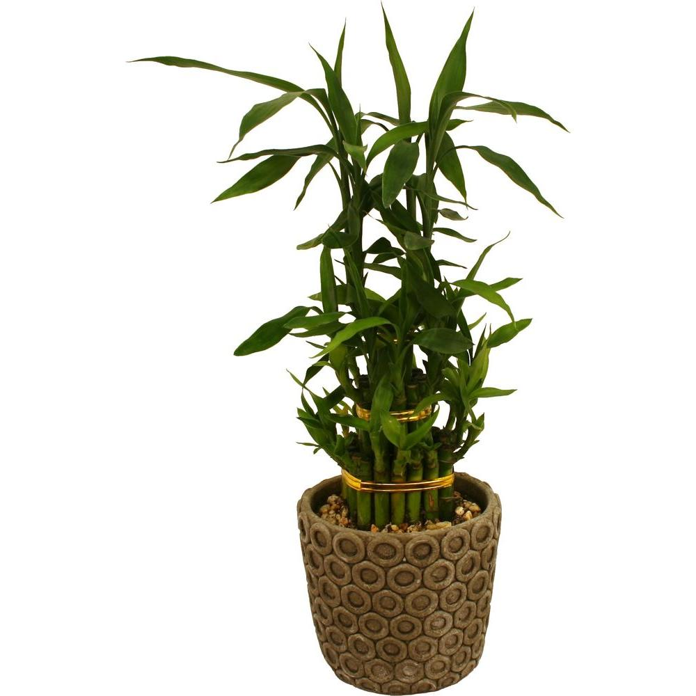 Delray Plants 5in Bamboo Hillary Grey Pot-DISCONTINUED