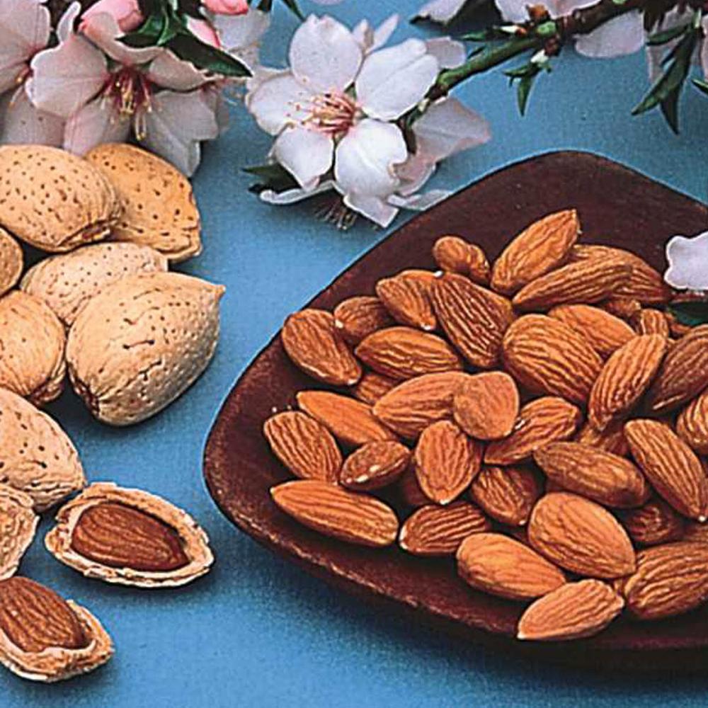 Hall's Hardy Almond Prunus Live Bareroot Nut Tree (1-Pack)
