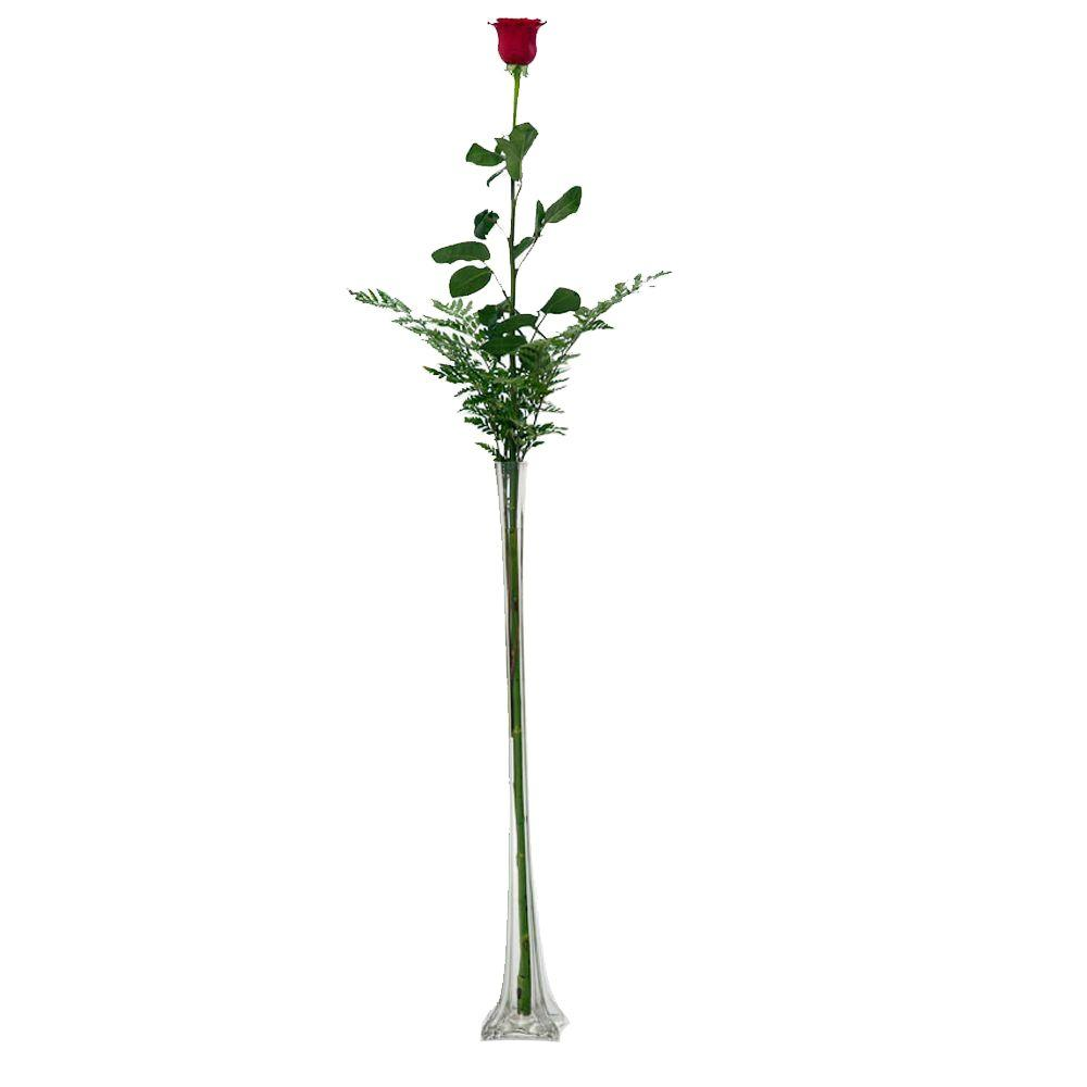 The Ultimate Bouquet Stunning 4 ft. Single Stem Rose in Clear Vase Overnight Shipping Included