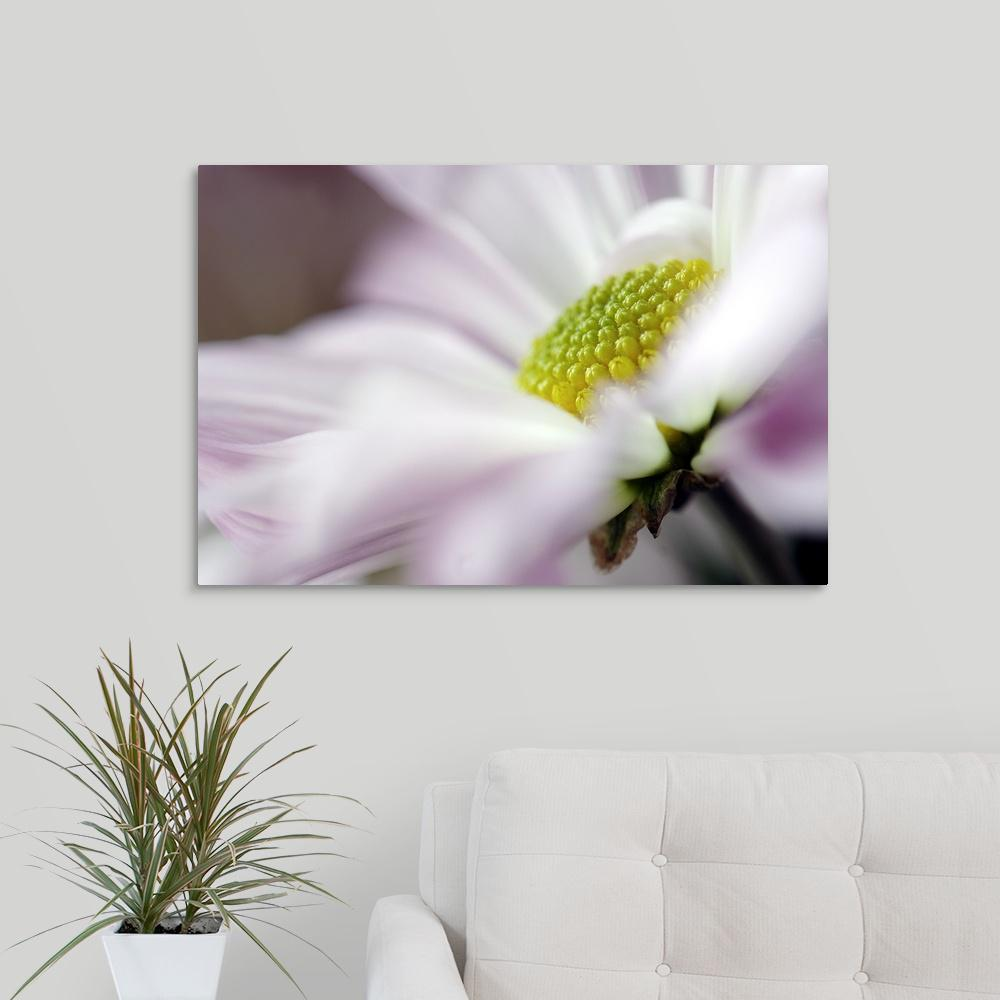 """Stamen of White Daisy with Hint of Purple"" by Mike Moats"