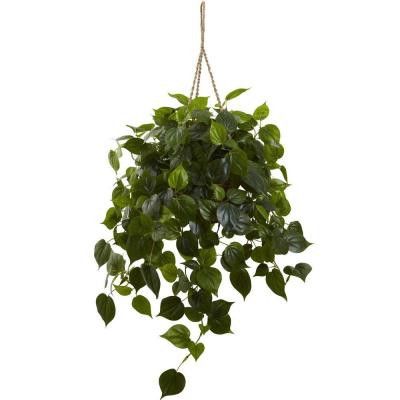 Philodendron Hanging Basket