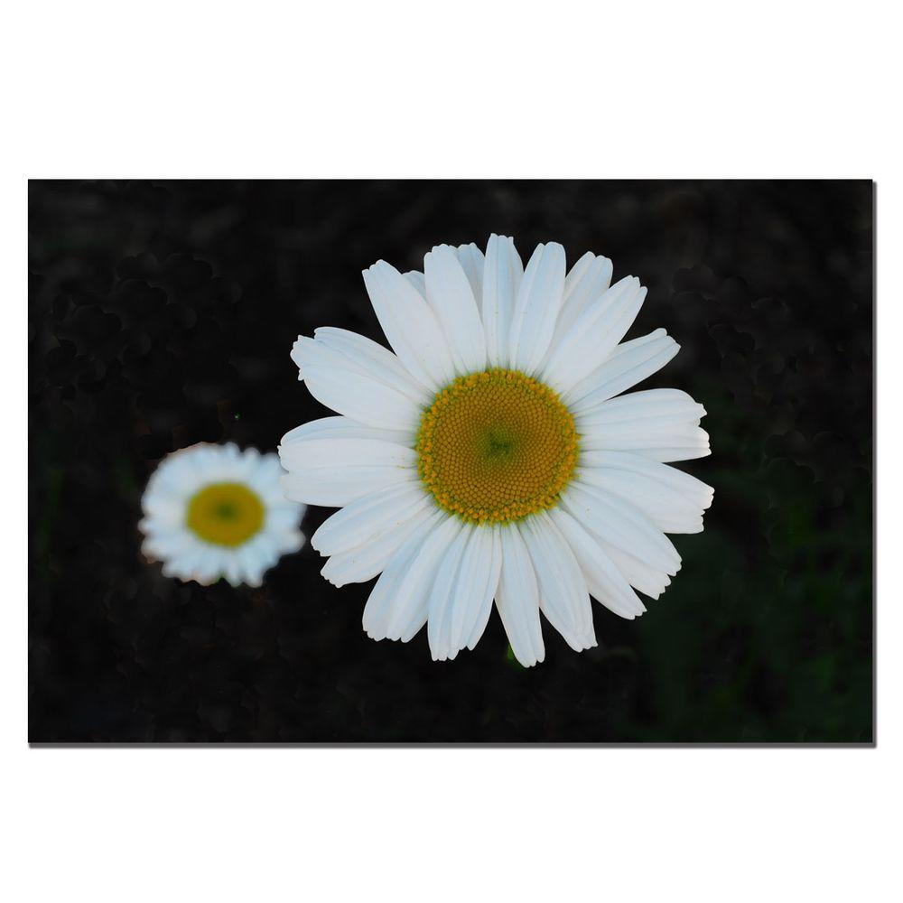 Trademark Fine Art 24 in. x 16 in. Daisies on Black Canvas Art