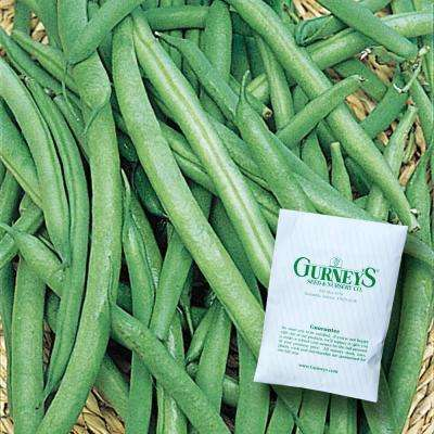 Bush Bean Early Contender (2 oz. Packet)