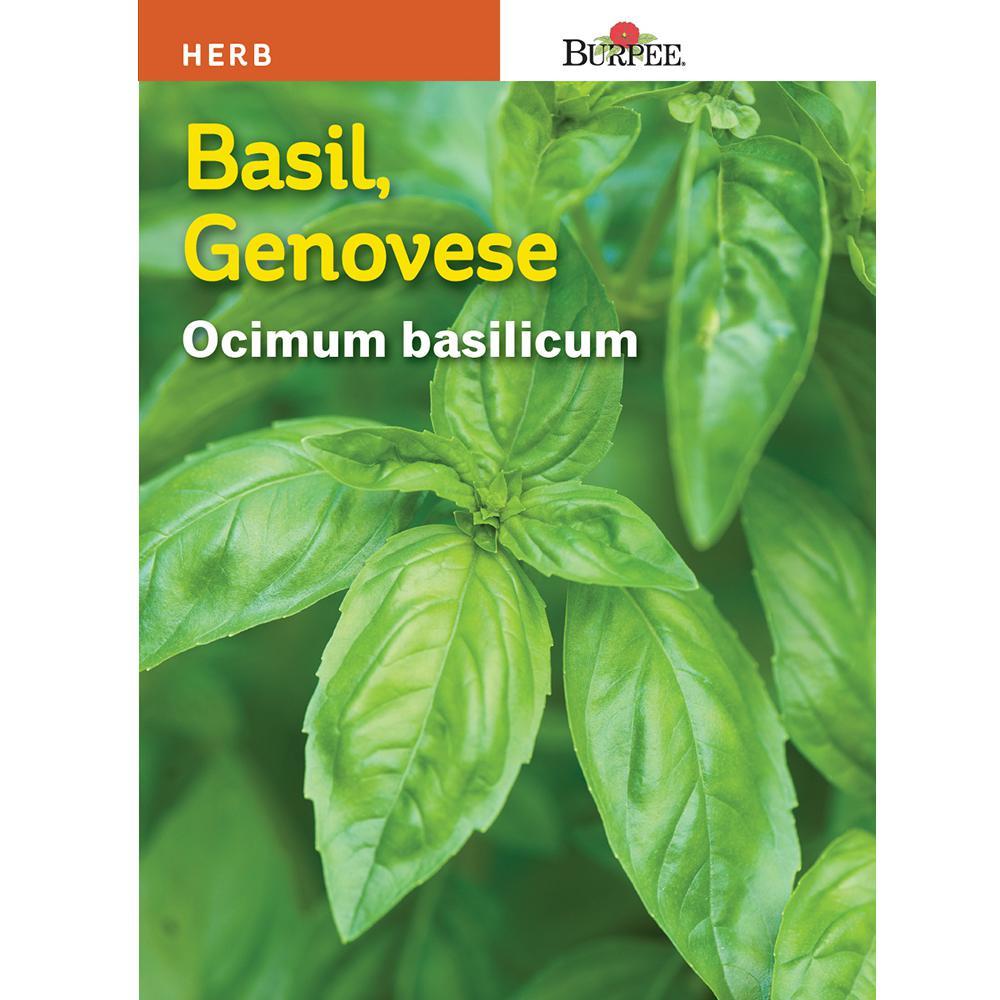 Basil Genovese Seed