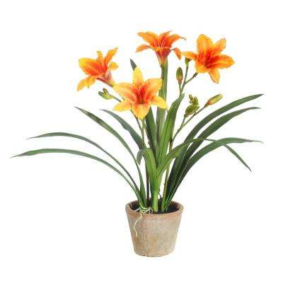 25 in. Potted Daylily