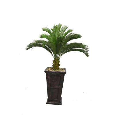 67 in. Tall Cycas Palm Tree in 16 in. Fiberstone Planter