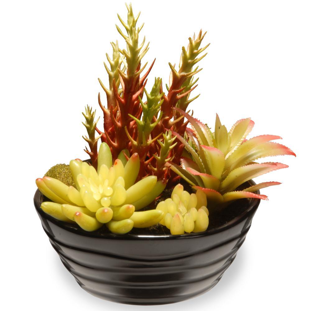 7.8 in. Succulent in Ceramic Pot