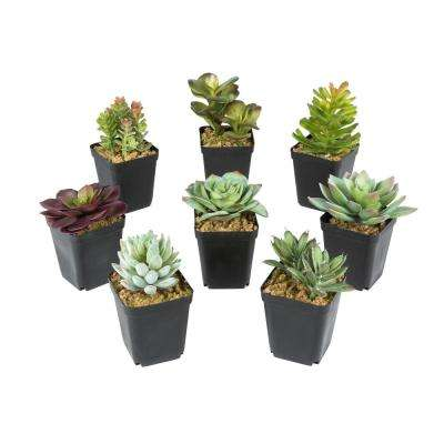 4 in. x 5 in. Green Plastic Mixed Succulent Plants in Planter (8-Set)