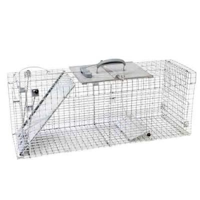 Large 1-Door Collapsible Easy Set Live Animal Cage Trap for Raccoon, Opossum, Groundhog, and Feral Cat