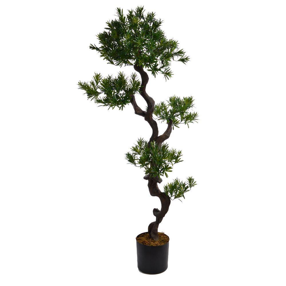 59 in. Tall Yacca Tree