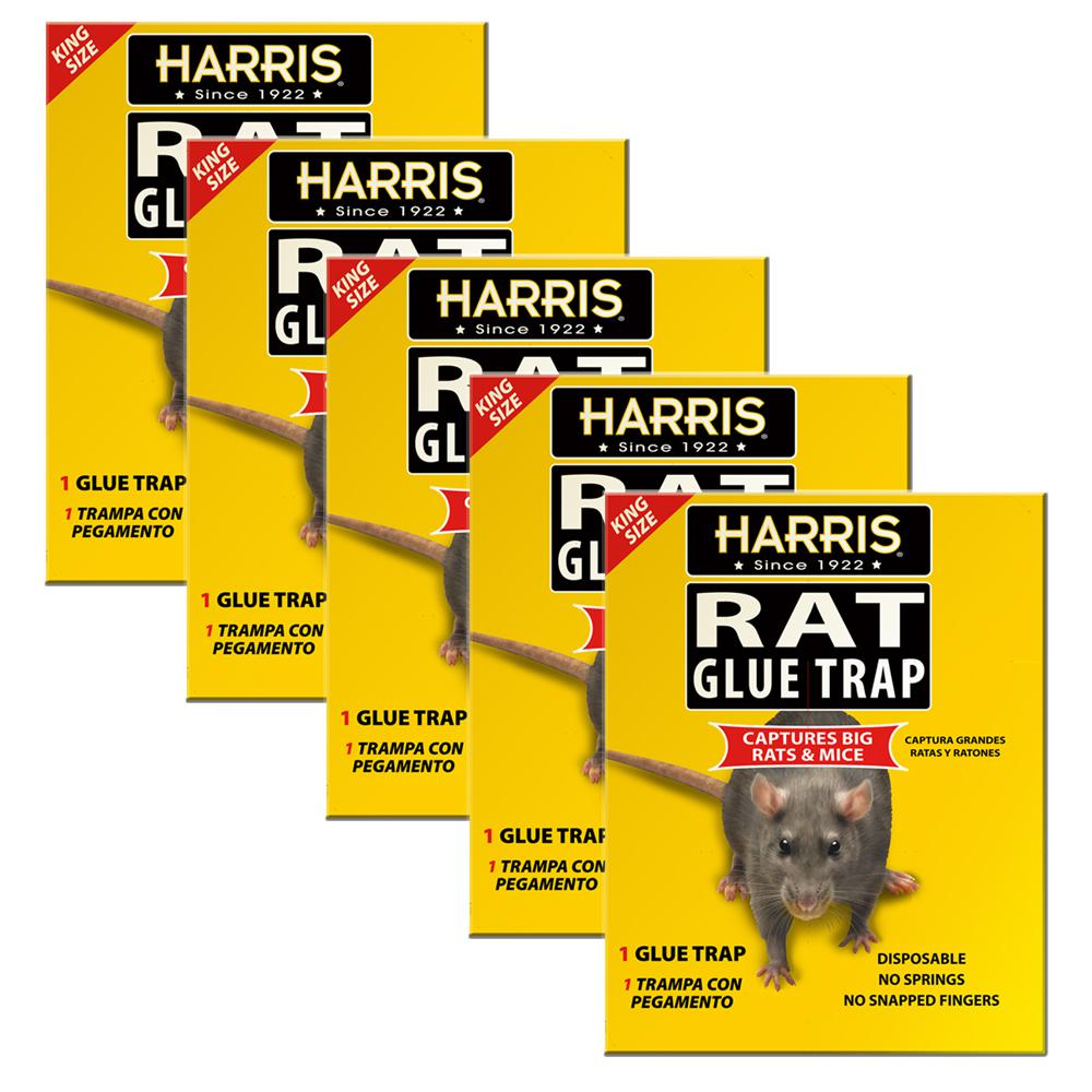 King Size Rat and Mouse Glue Trap (5-Pack)