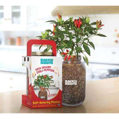 Windowsill Organic Chili Pepper Grow Kit