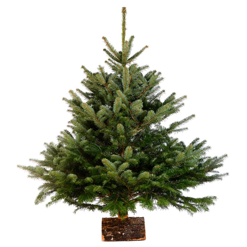 Online Orchards 3 ft. to 4 ft. Freshly Cut Nordmann Fir Live Christmas Tree (Real, Natural, Oregon-Grown)