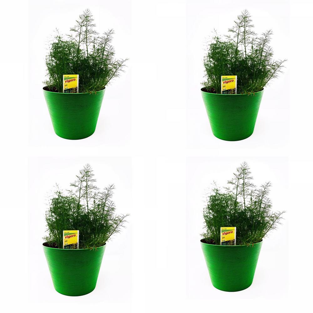 1.5 Qt. Herb Plant Dill in 6 In. Deco Pot (4-Plants)
