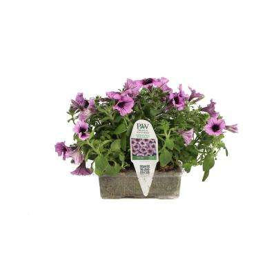 Supertunia Bordeaux Flower Pillow, 5 Live Plants in 6 in. x 4 in. Tray