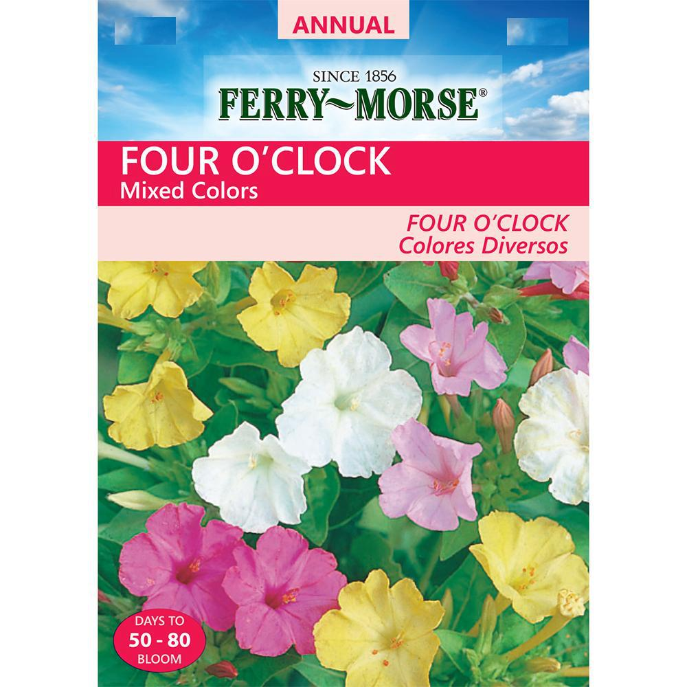 Four O'Clock Mixed Colors Seed